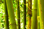 Make your own Bamboo Flute